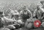 Image of Hawaiian pineapple workers resting Hawaii USA, 1916, second 60 stock footage video 65675022621