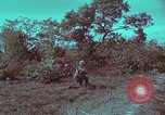 Image of 1st Battalion of 173rd Airborne Brigade Vietnam, 1965, second 44 stock footage video 65675022713