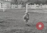 Image of Zonkey California United States USA, 1953, second 7 stock footage video 65675023023