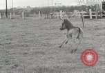 Image of Zonkey California United States USA, 1953, second 10 stock footage video 65675023023