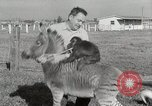 Image of Zonkey California United States USA, 1953, second 29 stock footage video 65675023023