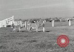 Image of Zonkey California United States USA, 1953, second 35 stock footage video 65675023023