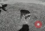 Image of Zonkey California United States USA, 1953, second 42 stock footage video 65675023023