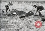Image of federal soldiers Ojinaga Mexico, 1913, second 46 stock footage video 65675023029