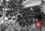 Image of Spanish Patio Mexico City Mexico, 1925, second 29 stock footage video 65675023038