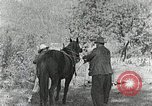 Image of Allanstand Cottage Industries Asheville North Carolina USA, 1935, second 11 stock footage video 65675023115