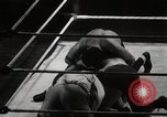 Image of Wrestling match Richmond Virginia USA, 1938, second 49 stock footage video 65675023168