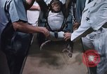 Image of Chimpanzee for spacecraft testing United States USA, 1960, second 14 stock footage video 65675023324
