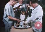 Image of Chimpanzee for spacecraft testing United States USA, 1960, second 16 stock footage video 65675023324
