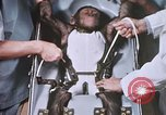 Image of Chimpanzee for spacecraft testing United States USA, 1960, second 34 stock footage video 65675023324