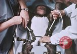 Image of Chimpanzee for spacecraft testing United States USA, 1960, second 35 stock footage video 65675023324