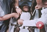 Image of Chimpanzee for spacecraft testing United States USA, 1960, second 44 stock footage video 65675023324