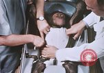 Image of Chimpanzee for spacecraft testing United States USA, 1960, second 45 stock footage video 65675023324