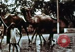 Image of Indian civilians India, 1965, second 7 stock footage video 65675028636