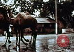 Image of Indian civilians India, 1965, second 8 stock footage video 65675028636
