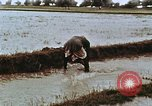 Image of Indian civilians India, 1965, second 13 stock footage video 65675028636