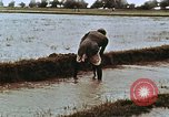 Image of Indian civilians India, 1965, second 15 stock footage video 65675028636