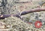 Image of Bulldozers and Rome plows Bein Hoa South Vietnam, 1967, second 53 stock footage video 65675029759