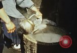 Image of Koreans loading wheat at dock South Korea, 1968, second 32 stock footage video 65675030472