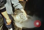 Image of Koreans loading wheat at dock South Korea, 1968, second 34 stock footage video 65675030472