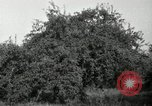 Image of apple orchards United States USA, 1916, second 5 stock footage video 65675030537