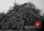Image of apple orchards United States USA, 1916, second 6 stock footage video 65675030537