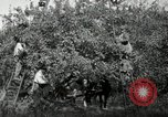 Image of apple orchards United States USA, 1916, second 14 stock footage video 65675030537