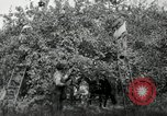 Image of apple orchards United States USA, 1916, second 19 stock footage video 65675030537
