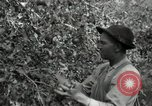 Image of apple orchards United States USA, 1916, second 32 stock footage video 65675030537