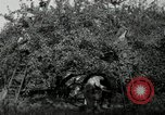 Image of apple orchards United States USA, 1916, second 47 stock footage video 65675030537