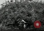Image of apple orchards United States USA, 1916, second 48 stock footage video 65675030537