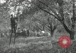Image of apple orchards United States USA, 1916, second 50 stock footage video 65675030537