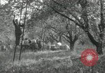Image of apple orchards United States USA, 1916, second 51 stock footage video 65675030537