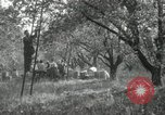 Image of apple orchards United States USA, 1916, second 52 stock footage video 65675030537