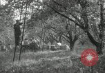 Image of apple orchards United States USA, 1916, second 54 stock footage video 65675030537