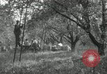 Image of apple orchards United States USA, 1916, second 55 stock footage video 65675030537