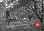 Image of apple orchards United States USA, 1916, second 56 stock footage video 65675030537