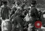 Image of apple orchards United States USA, 1916, second 60 stock footage video 65675030537