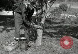 Image of apple grafting techniques United States USA, 1916, second 10 stock footage video 65675030538