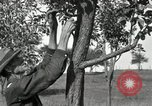 Image of apple grafting techniques United States USA, 1916, second 22 stock footage video 65675030538