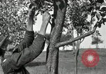 Image of apple grafting techniques United States USA, 1916, second 24 stock footage video 65675030538