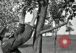 Image of apple grafting techniques United States USA, 1916, second 25 stock footage video 65675030538