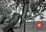 Image of apple grafting techniques United States USA, 1916, second 26 stock footage video 65675030538