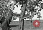 Image of apple grafting techniques United States USA, 1916, second 29 stock footage video 65675030538