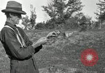 Image of apple grafting techniques United States USA, 1916, second 37 stock footage video 65675030538