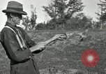 Image of apple grafting techniques United States USA, 1916, second 39 stock footage video 65675030538