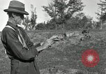 Image of apple grafting techniques United States USA, 1916, second 40 stock footage video 65675030538