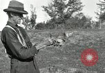Image of apple grafting techniques United States USA, 1916, second 42 stock footage video 65675030538