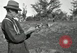 Image of apple grafting techniques United States USA, 1916, second 46 stock footage video 65675030538