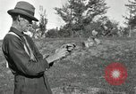 Image of apple grafting techniques United States USA, 1916, second 47 stock footage video 65675030538
